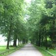 ヘルンブルンへの並木道