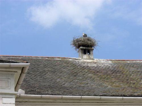 コウノトリの巣