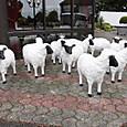 モン・サン・ミッシェル/羊