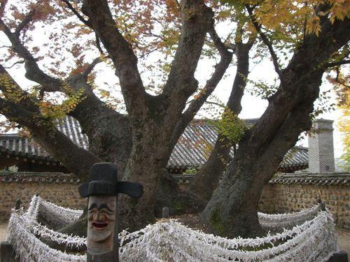 三神堂 神木