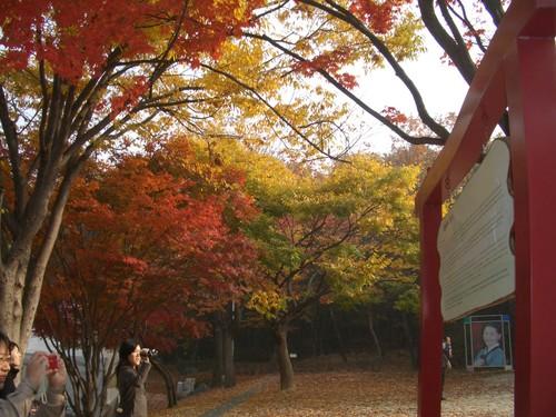 チャングムテーマパーク入り口前の紅葉