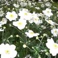 ブランリーの庭に咲く花