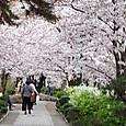 宝塚・花の道