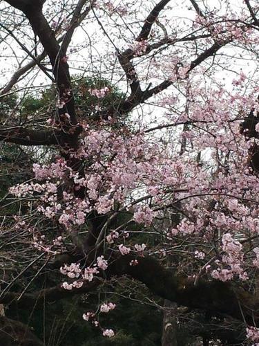 上野公園 2016年3月23日