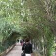 ヘネラリーフェ/夾竹桃のアーチ
