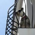 ミハス/サン・セバスチャン通りの犬