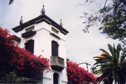 ポルトガル・マデイラ島/ブーゲンビリア