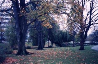 公園・ニュージーランド